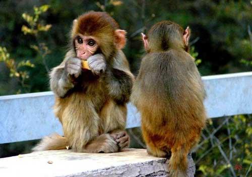 猕猴谷01.jpg