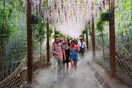 游客游览紫藤长廊