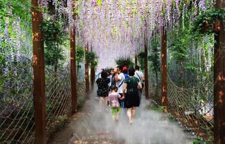 云台山红石峡紫藤长廊