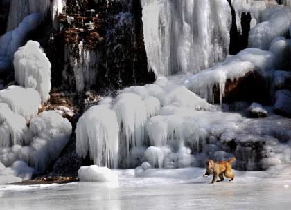 冬季云台山瀑布