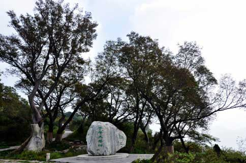 千年榔榆林