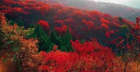 云台山秋季赏红叶