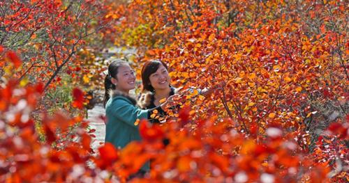 青天河——靳家岭游览区